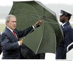 Umbrella_bush
